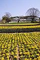 Hyogo Prefectural Flower Center Kasai Japan04bs.jpg