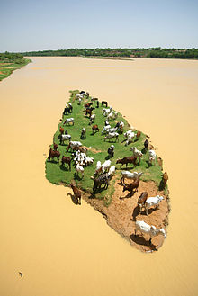 ILRI, Stevie Mann - Livestock graze on an island in the Niger.jpg