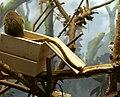 I love monkeys (2710168306).jpg