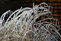 Icy grass, Boxborough, Massachusetts, 2008.jpg
