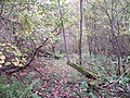 In Lemington Coppice - geograph.org.uk - 1581848.jpg