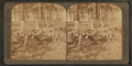 In the great pine forest, collecting turpentine, North Carolina, from Robert N. Dennis collection of stereoscopic views.png
