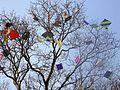 Indian Kites.jpg