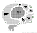 Info land mammals by weight.png