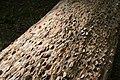 Ingleton Falls Trail - geograph.org.uk - 1130957.jpg