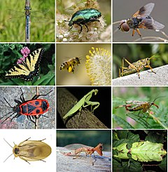 Insects collage.jpg