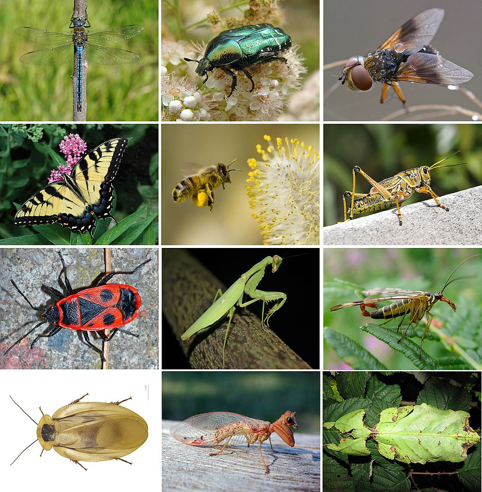Insects collage