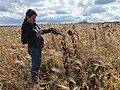 Inspecting Cover Crops in Bear Butte's Shadow (30156777150).jpg