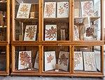 Institutul Botanic, Muzeul Botanic, Cluj-Napoca-9954.jpg