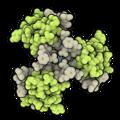 Insulin degludec hexamer 4AKJ.png