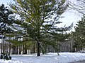 Iroquoian Village, Ontario, Canada35.JPG