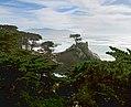 J20161104-0083—Lone Cypress—17 Mile Drive (30665287670).jpg