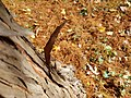 Jack Nicklaus Park (formerly Parkway Park) (30703008990).jpg