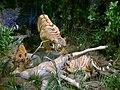 Jagal mai lion.jpg