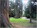 January Frost Botanic Garden Freiburg Redwood - Master Botany Photography 2014 - series Germany Diamond pictures - panoramio.jpg