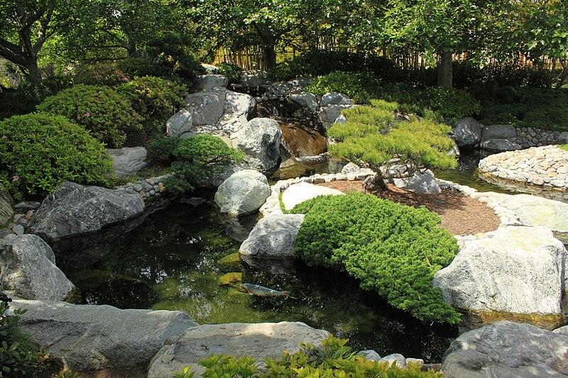japanese koi garden inspired - photo #10