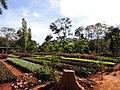 Jardim das Aroeiras, Goiânia - GO, Brazil - panoramio.jpg