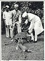Jawaharlal Nehru, playing with tiger cubs at Teen Murti Bhavan.jpg