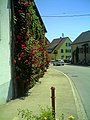 Juni in Ihringen - panoramio (3).jpg