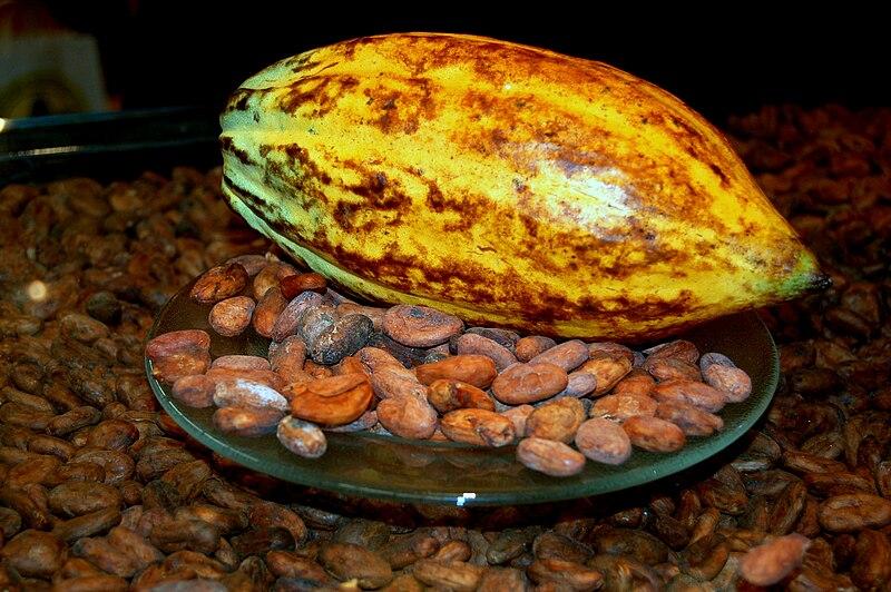File:Kakaofrucht mit Kakaobohnen.jpg