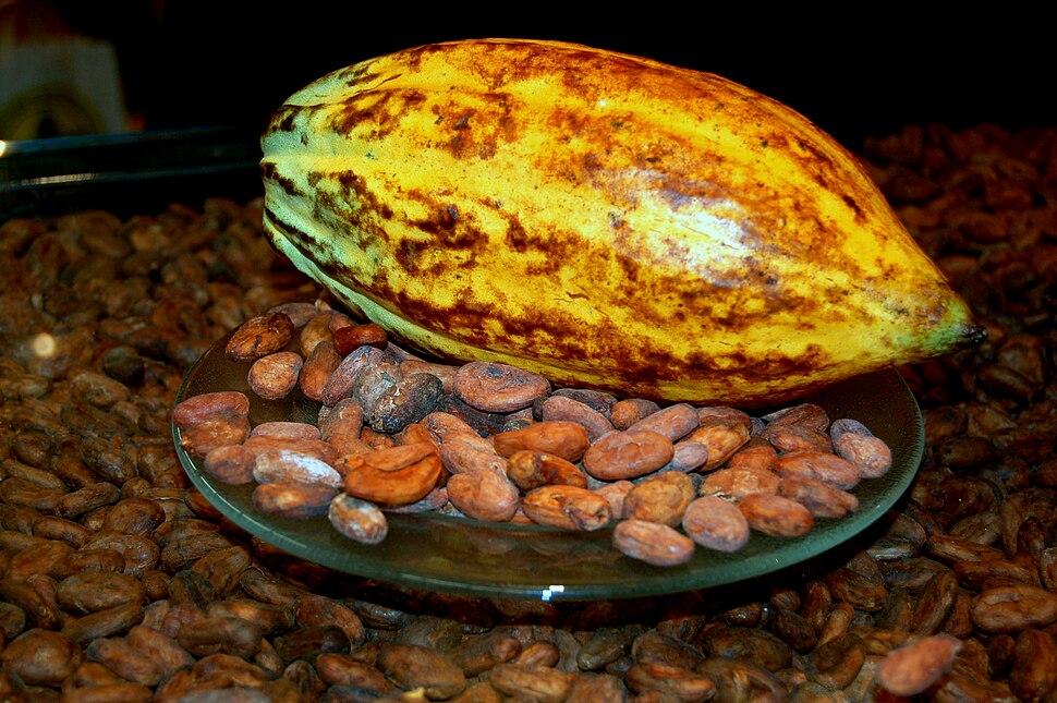 Kakaofrucht mit Kakaobohnen