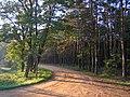 Kampinoski Park Narodowy okolice palmir 03.JPG