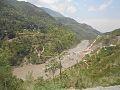 Kashmir Kel.jpg