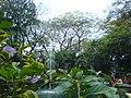 Kebun bibit - panoramio.jpg