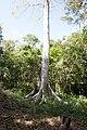 Khao Phra Wihan National Park - Don Tuan Khmer Ruins (MGK20848).jpg