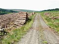 Kielder Forest, near Willowbog - geograph.org.uk - 209627.jpg