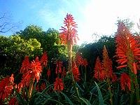 Kirstenbosch National Botanical Garden by ArmAg (14).jpg