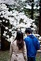 Koganei Park -4月.jpg