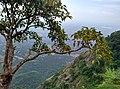 Kollengode South, Kerala, India - panoramio (40).jpg
