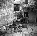 Koruzo pripravljajo za sušenje, Dekani 1949.jpg