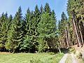 Koserbachtal - panoramio.jpg