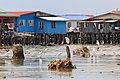 KotaKinabalu Sabah Egrets-at-Kg-Tanjung-Au-Lama-01.jpg
