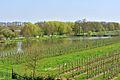 Kreis Pinneberg, Naturschutzgebiet 34 WDPA ID 30102 Haseldorfer Binnenelbe mit Elbvorland 01.jpg