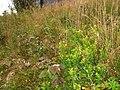 Kurort Brotterode, Germany - panoramio (1).jpg