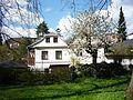 Kvetoucí třešeň v parku Budoucnost.JPG