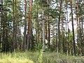 Labanoro sen., Lithuania - panoramio (5).jpg