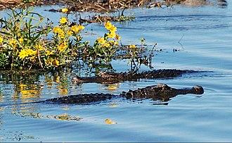 Hayes, Louisiana - Image: Lacassine National Wildlife Refuge