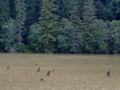 Lacul Rosu 098.jpg