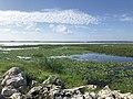 Lake Tohopekaliga - Eric Statzer.jpg