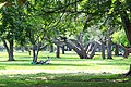 Lalbagh garden in banglore long sight.jpg