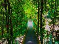 Lambir-Hills-National Park-Canopy-Walkway.jpg