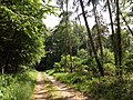 Landschaftsschutzgebiet Düingdorfer Berg Datei 20.jpg