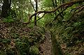 Laurissilva da Madeira 10.jpg