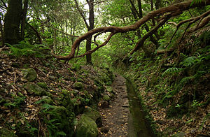 Laurel forest - Old roads and passages between villages and other places in Madeira Island surrounded by prehistoric forest.