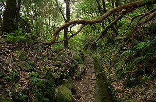 Laurissilva da Madeira 10