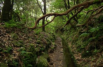 Laurel forest - Old roads and passages between villages and other places in Madeira Island surrounded by prehistoric forest